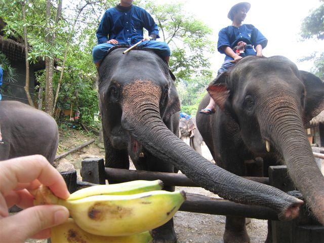 Mae Sa Elephant Camp2