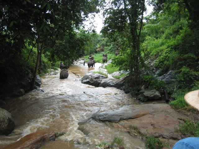 Mae Sa Elephant Camp3