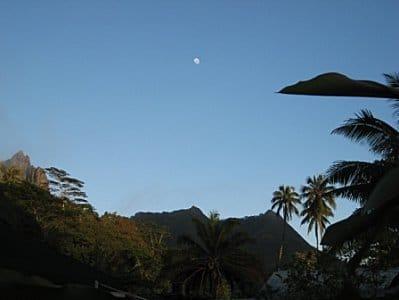 Moorea-Criobe 3759