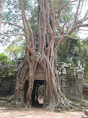 Siam-Reap-et-Angkor-Cambodge_6493.jpg