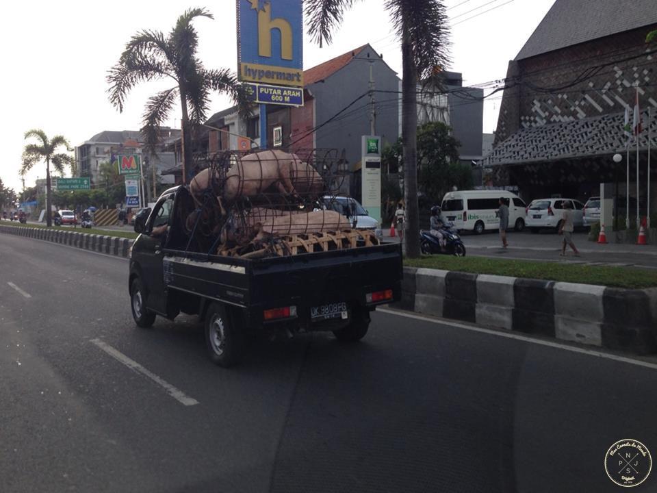 Trasnport de grosses cochonnes à Bali... (toute mauvaise interprétations serait surement fortuite...)