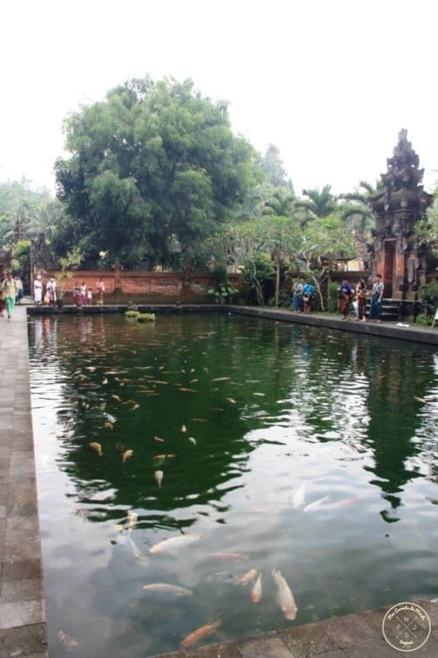 Tirta Empul Bassin 2