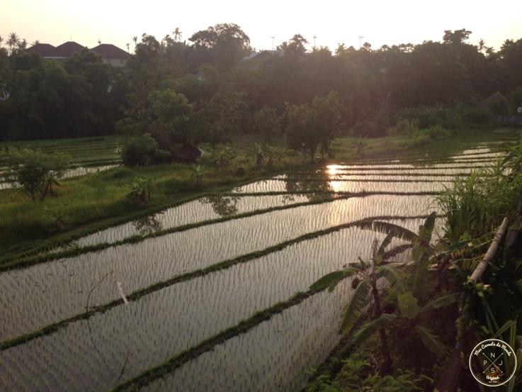 reflets de rizieres