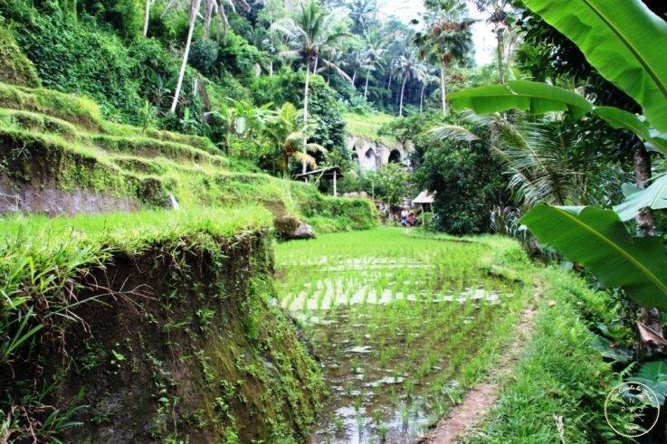 Gunung Kawi 26