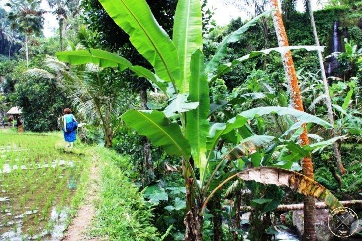 Gunung Kawi 30