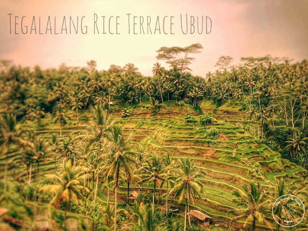 Indonésie - Tegalalang Rice Terrace à Ubud, Bali - Mes Carnets du Monde
